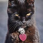 Little Black Kitty by Susie Peek