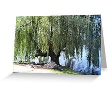 Old Weeping Willow Tree Greeting Card