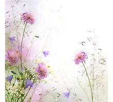 Soft,gentle,flowers,floral,modern,trendy,girly,nature,wild flowers Photographic Print