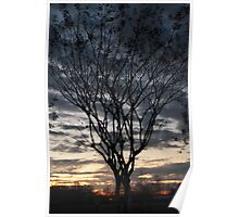 Sunrise Through a Tree Poster
