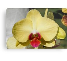 orchid bloom Metal Print