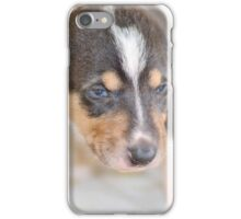 Cute smooth collie puppy iPhone Case/Skin