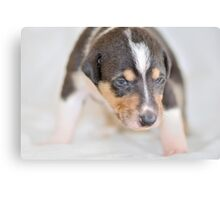 Cute smooth collie puppy Canvas Print