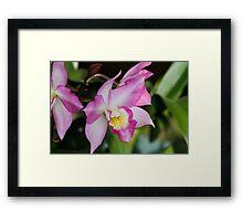 orchid bloom Framed Print