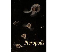 Pteropods Photographic Print