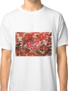 red maple Classic T-Shirt