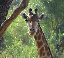 African Wildlife by Hermien Pellissier