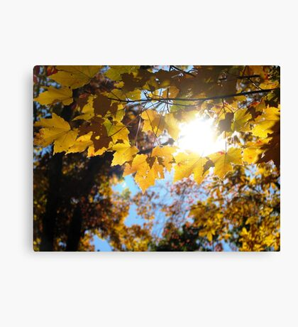 Let The Sun Shine In Canvas Print