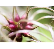 abstract plants Photographic Print
