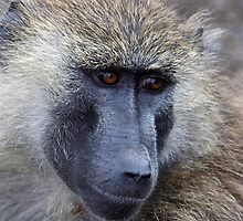 Olive Baboon Portrait by Carole-Anne