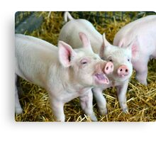 Playful Piggies Canvas Print