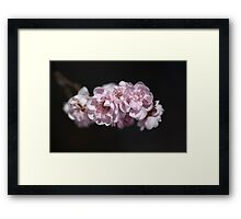Soft As Spring Framed Print
