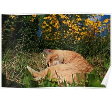 Ginger cat and yellow flowers Poster