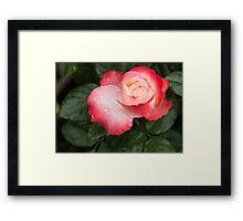 Speaking of Sweetheart Roses Framed Print