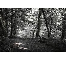 WOODLAND REST Photographic Print