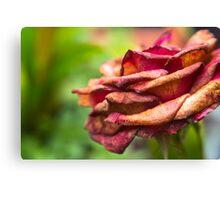 rozze Canvas Print