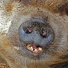 """""""i'm a cheeky chappy"""" by Sandra Caven"""