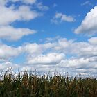"""Corn field in autumn with """"popcorn"""" clouds by rvjames"""