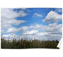 "Corn field in autumn with ""popcorn"" clouds Poster"