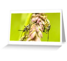 Insectzz Greeting Card