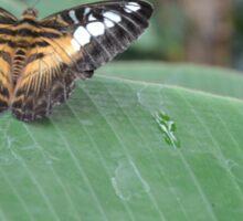 Butterfly on Leaf Sticker