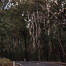 Road Toolangi to Healesville Victoria 20160903 7443  by Fred Mitchell
