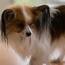 Papillion 20160905 7453 by Fred Mitchell