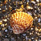 Sunlit Shell & Fragments #1 by Marilyn Harris