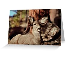 Mule Deer Doe Greeting Card