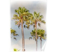 Palm Trees Santa Monica Beach California Poster