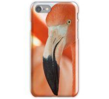 Caribbean Flamingo iPhone Case/Skin