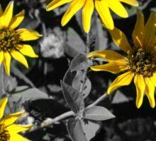 Yellow Flowers with B&W Background Sticker