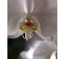 White orchid - 2016 Photographic Print