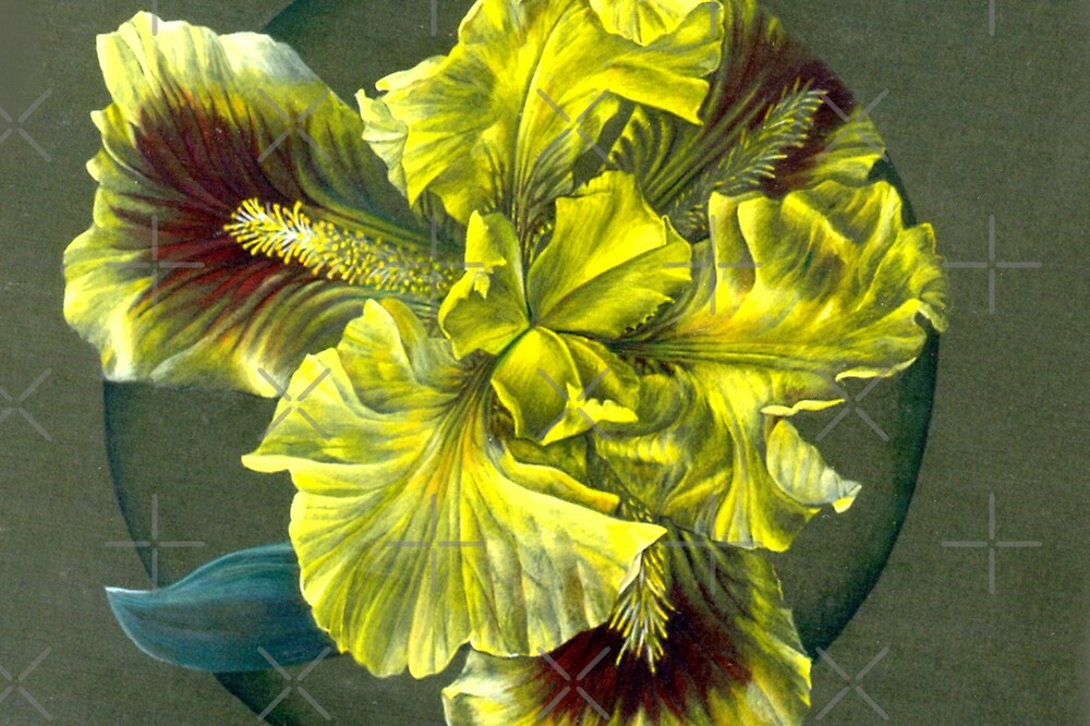 Looking into the yellow Iris by Sarah Trett
