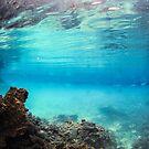 Brackish water pond by Vince Gaeta
