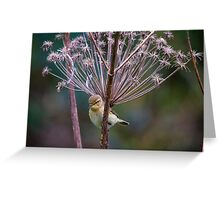 Young Willow Warbler sitting amongst Cow Parsley Greeting Card