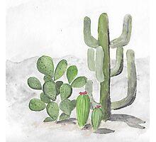 desert cacti Photographic Print