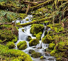 Mt. Rainier Stream by Gary Gray