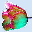 Tulip colour inversion by bubblehex08