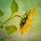 Sun Flower by LudaNayvelt