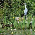 Heron at Last ! by relayer51