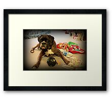 Is That Another Christmas Present For Me ?  - Boxer Dogs Series Framed Print