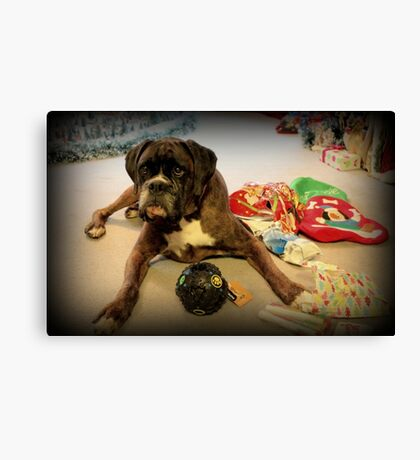 Is That Another Christmas Present For Me ?  - Boxer Dogs Series Canvas Print