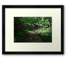 Tranquilizing journey beneath the leaves Framed Print