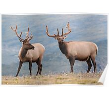 Elk in Rocky Mountain National Park Poster