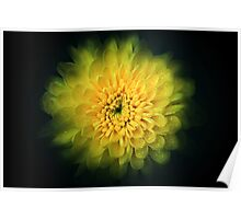 Abstract flower background Poster