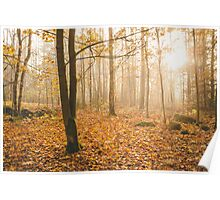 Foggy morning autumn forest Poster