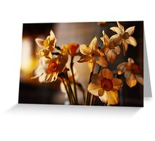 Spring flowers daffodils  Greeting Card