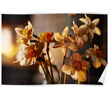 Spring flowers daffodils  Poster