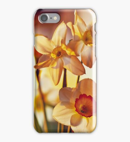 Spring flowers daffodils  iPhone Case/Skin